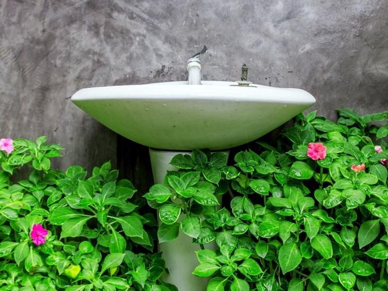 Pflanzen fürs Bad: Die besten Profi-Tipps auf einen Blick!