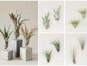 Evrgreen Luftpflanzen