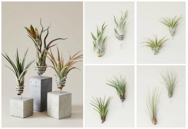tillandsie die luftpflanze ohne wurzel als badezimmerdeko. Black Bedroom Furniture Sets. Home Design Ideas