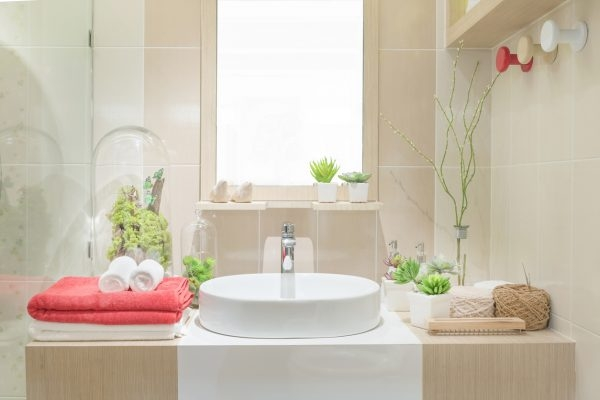 Luftpflanze in Badezimmer